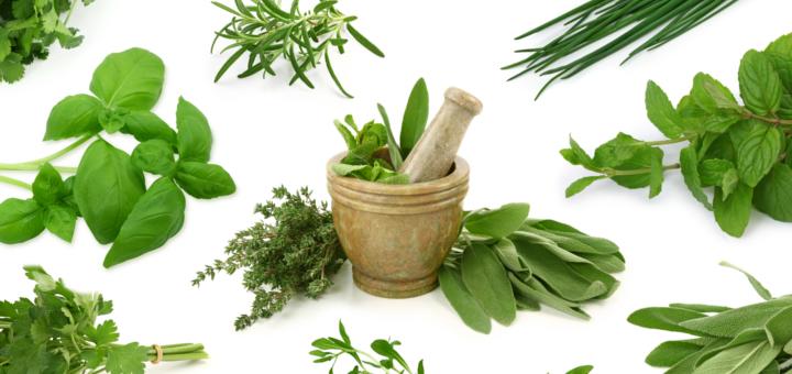 Buscando remedios naturales para todo