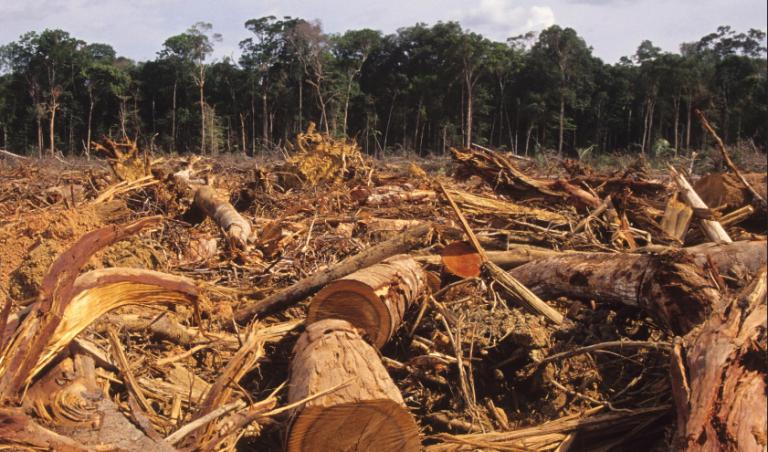 Bolsonaro quiere entregar riquezas naturales a capital extranjero