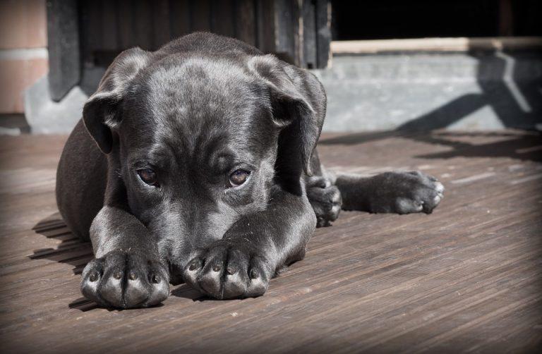 lo que debes saber de tu mascota